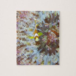 ピエロのAnemonefishのパズル ジグソーパズル