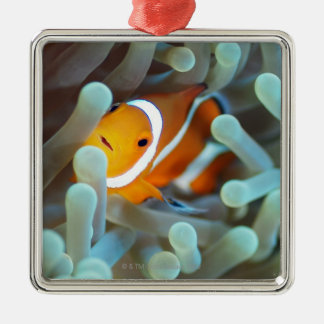ピエロのanemonefish 3 メタルオーナメント