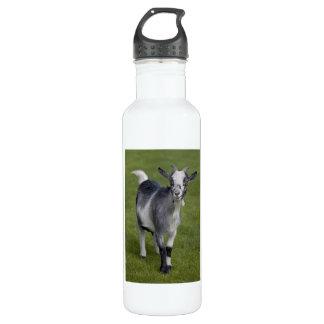 ピグミーのヤギ ウォーターボトル