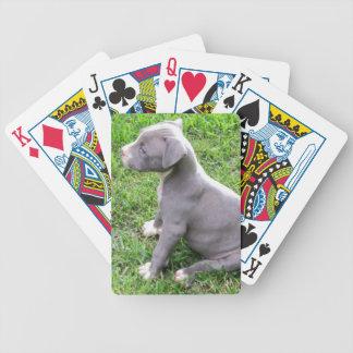 ピットブルの子犬のトランプ バイスクルトランプ