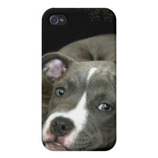 ピットブルの子犬のSpeckの青い箱 iPhone 4 Case