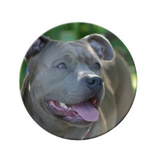 ピットブルテリア犬 磁器プレート