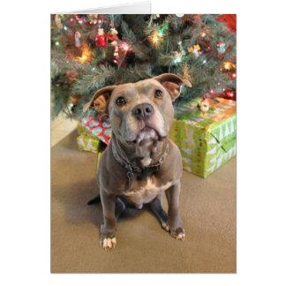 ピットブル愛クリスマスのブランクのクリスマスカード カード