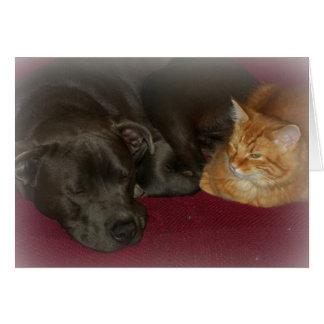 ピット・ブルおよび虎猫猫の友人は永久に梳きます カード