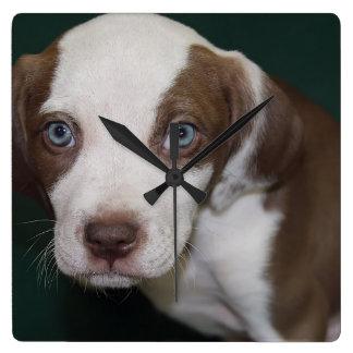 ピット・ブルの子犬の時計 スクエア壁時計