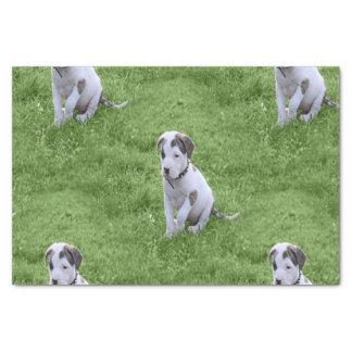 ピット・ブルのT骨の子犬 薄葉紙
