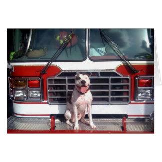 ピット・ブルのT骨の火の家犬 カード