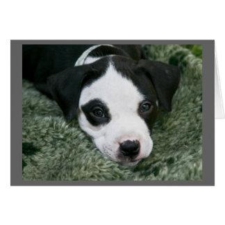 """ピット・ブルテリアの子犬カード- """"アンジー"""" カード"""