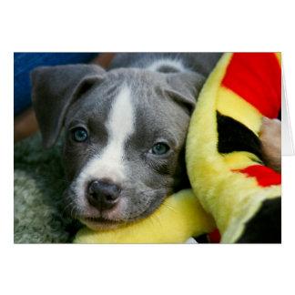 """ピット・ブルテリアの子犬カード- """"Mikey """" カード"""