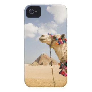 ピラミッドギーザ、エジプトを持つラクダ Case-Mate iPhone 4 ケース