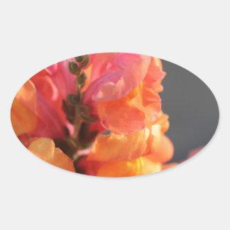 ピンクおよびオレンジ熱帯花 楕円形シール