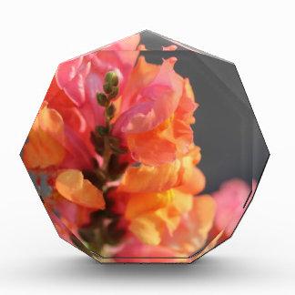 ピンクおよびオレンジ熱帯花 表彰盾
