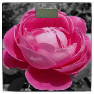 ピンクおよび灰色のバラ 体重計