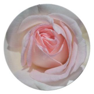 ピンクおよび白いバラのプレート プレート