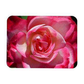 ピンクおよび白いバラの磁石 マグネット