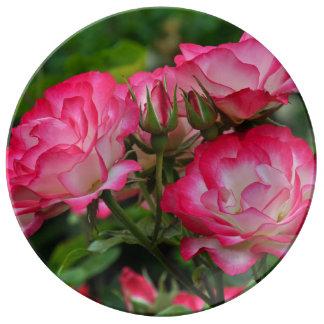 ピンクおよび白いバラ 磁器プレート