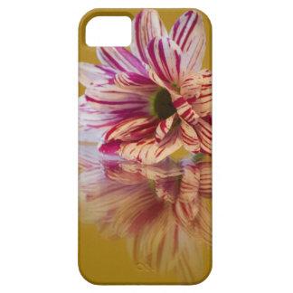 ピンクおよび白いStripeyのガーベラの花 iPhone SE/5/5s ケース
