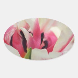 ピンクおよび白のねじれ 楕円形シール