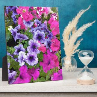 ピンクおよび紫色のペチュニアの花 フォトプラーク
