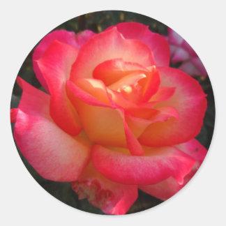 ピンクおよび黄色バラ ラウンドシール