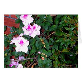 ピンクか白いツツジ及び煉瓦 カード