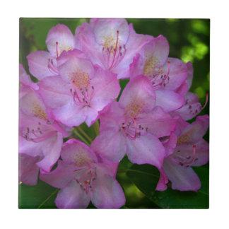 ピンクがかった紫色のシャクナゲCatawbiense タイル