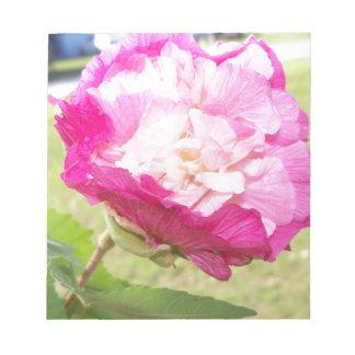 ピンクそして白い可変性のハイビスカスの開花 ノートパッド