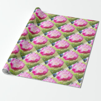 ピンクそして白い可変性のハイビスカスの開花 ラッピングペーパー