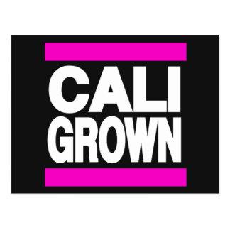 ピンクに育つCali ポストカード
