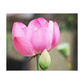 ピンクのはすの花 キャンバスプリント