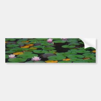 ピンクのはすスイレンの花の池 バンパーステッカー