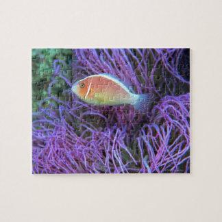 ピンクのアネモネ魚の側面図、沖縄、日本 ジグソーパズル