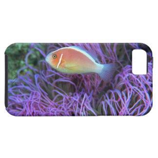 ピンクのアネモネ魚の側面図、沖縄、日本 iPhone SE/5/5s ケース