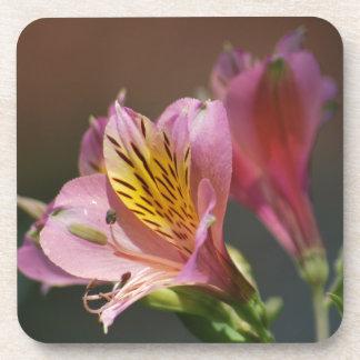 ピンクのインカ人ユリの花および意味 コースター