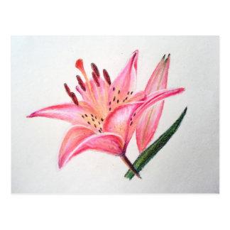ピンクのオニユリ-油のパステル調のプリント ポストカード