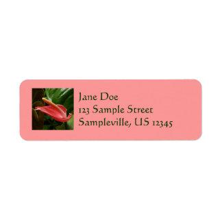 ピンクのオランダカイウユリのエレガントな花の写真 ラベル