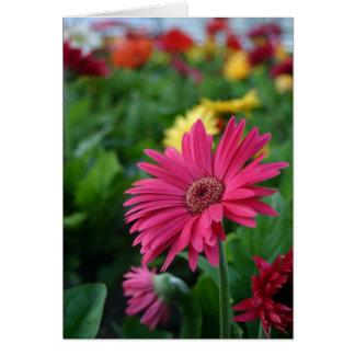 ピンクのガーベラのデイジーの想像的なイメージはギフトを梳きます カード