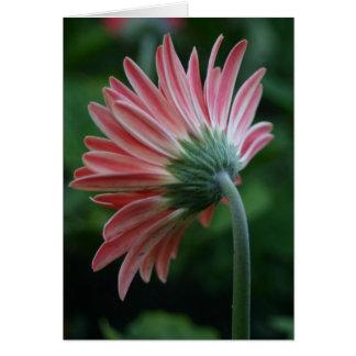 ピンクのガーベラのデイジーの花の裏側 カード