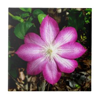 ピンクのクレマチスの花 タイル