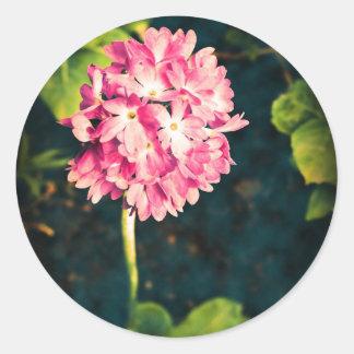 ピンクのサクラソウ属の花 ラウンドシール