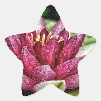 ピンクのスイレン 星シール