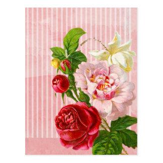 ピンクのストライプおよび鮮やかなバラ ポストカード