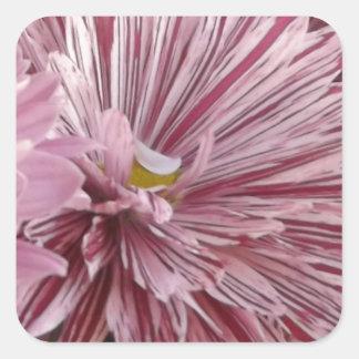 ピンクのストライプのな花 スクエアシール