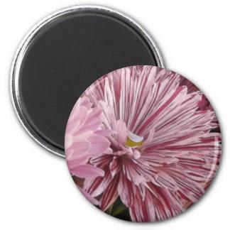ピンクのストライプのな花 マグネット
