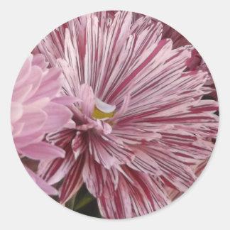 ピンクのストライプのな花 ラウンドシール