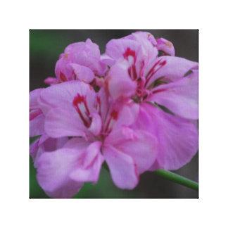 ピンクのゼラニウムはキャンバスのプリントを伸ばしました キャンバスプリント