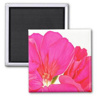 ピンクのゼラニウム マグネット