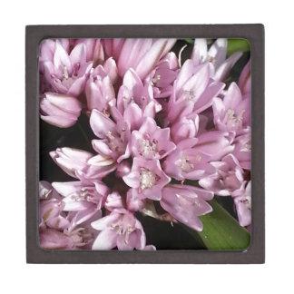 ピンクのタマネギの花 ギフトボックス