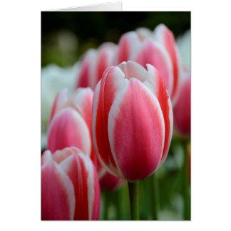 ピンクのチューリップが付いている空白のな挨拶状 グリーティングカード