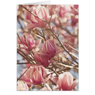 ピンクのチューリップ木の抽象的な写真 カード